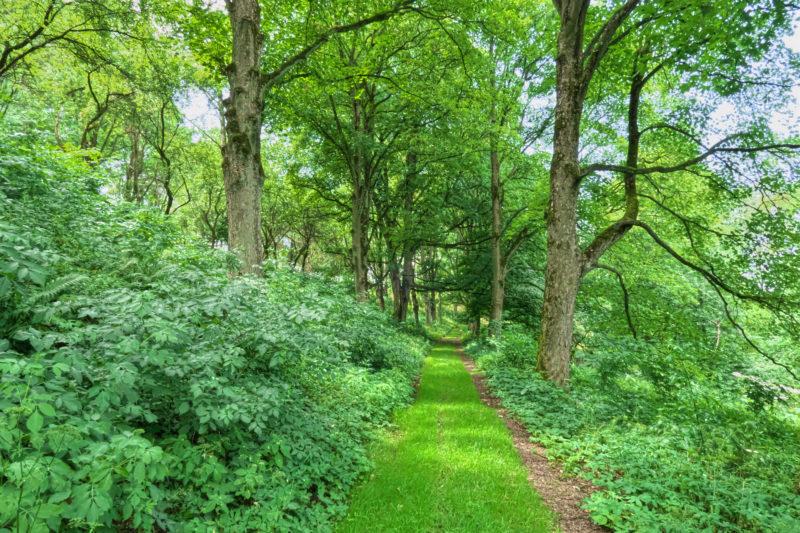 Česko potřebuje 10 milionů stromů